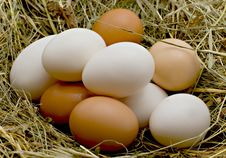Free Eggs Royalty Free Stock Image - 8804416