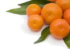 Free Tangerines Stock Photography - 8804432