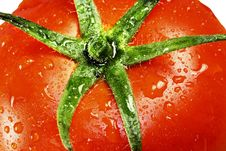 Free Tomato Royalty Free Stock Photography - 8805257