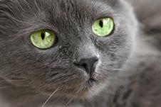 Free Cat Stock Photo - 8807220