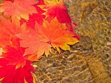 Free Underwater Maple Leaves In Forest Stream Stock Photo - 8807800