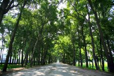 Road And Trees Royalty Free Stock Photos