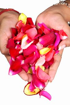 Free Rose Petals Stock Images - 8809844