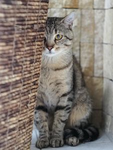Free Toby The Cat... Stock Images - 88032304