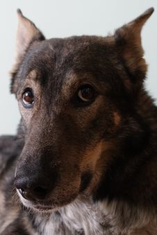 Free Dog, Dog Breed, Carnivore, Jaw Stock Image - 88032431