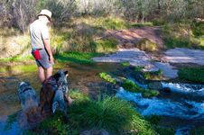 Free Fossil Springs Wilderness: Springs Area Stock Photo - 88032660