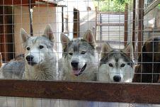 Free Dog, Carnivore, Dog Breed, Fence Stock Photography - 88032902