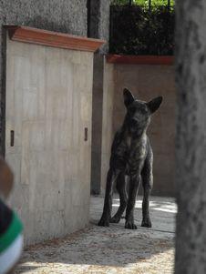 Free Dog, Dog Breed, Carnivore, Grey Royalty Free Stock Image - 88033006