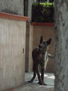 Free Carnivore, Felidae, Dog Breed, Window Royalty Free Stock Photo - 88033015