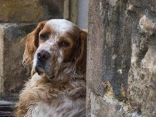 Free Cutest Dog In St Cyprien-dordogne-em10-70-300mm-20150721-P7210001 Stock Image - 88033071