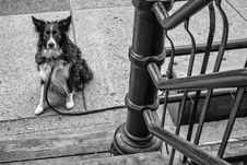 Free 139 Dog Of Revolver-vancouver-gastown-xe2-zeiss35-2-20150810-DSCF6720-Edit Royalty Free Stock Image - 88033356