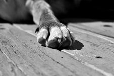 Free I M Putting My Paw Down On This Idea Stock Image - 88034711
