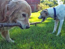 Free Dog Tug Of War Royalty Free Stock Images - 88035099