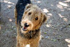 Free Dog, Dog Breed, Carnivore, Companion Dog Stock Image - 88035361