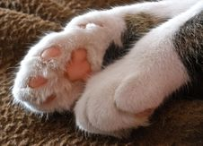 Free Fuzzy Paws Stock Photos - 88036473