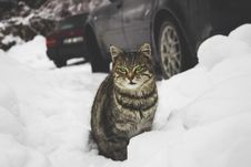 Free Tabby Cat Sitting In The Snow Stock Photography - 88038852