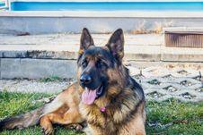 Free German Shepherd Dog Outside Royalty Free Stock Photography - 88038887