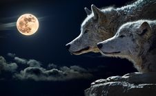 Free Portrait Of Wolves With Full Moon Royalty Free Stock Photo - 88039025