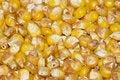Free Corn 2 Royalty Free Stock Image - 8811996