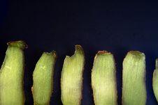Free Kiwifruit Series Royalty Free Stock Images - 8811199