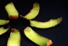 Free Kiwifruit Series Stock Images - 8811214