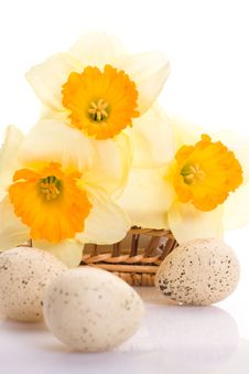 Free Daffodils And Easter Eggs Stock Images - 8811364