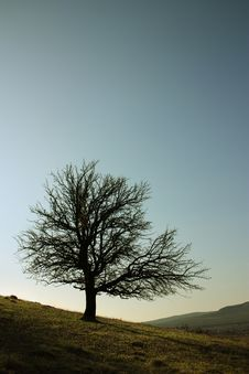 Free Isolated Tree Spring Field Stock Image - 8811381
