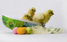 Free Easter Chicken Royalty Free Stock Image - 8811556