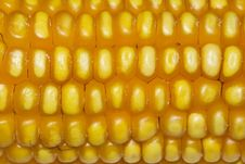 Free Corn 1 Royalty Free Stock Photos - 8811968