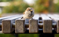 Free Small New Zealand Bird Perched On A Table Royalty Free Stock Photo - 8812545