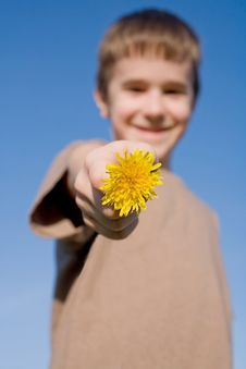 Free Boy Holding A Dandelion With Big Smile Royalty Free Stock Photography - 8812837
