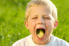 Free Eating Little Boy Royalty Free Stock Photography - 8814927