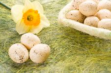 Free Daffodil And Basket With Easter Eggs Royalty Free Stock Photography - 8815867