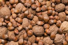 Free Nuts Stock Photo - 8816770