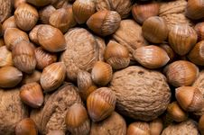 Free Nuts Stock Photo - 8816810