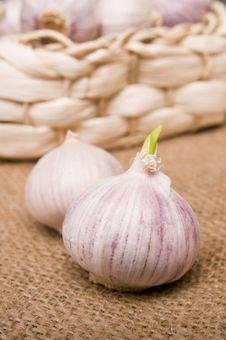 Free Garlic Stock Images - 8816934
