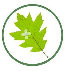 Free Leaf Stock Image - 8817281