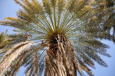Free Palm Tree Stock Photography - 8817282