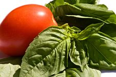 Free Fresh Tomato And Basil Stock Photography - 8818522