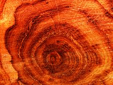 Cut Of A Tree An Oak Stock Photos