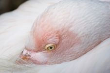 Free Swan Stock Photography - 8819162