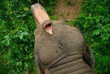 Free Elephant S Trunk Stock Photos - 8819343