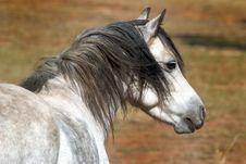 Free Grey Pony Stock Photo - 8819720