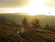 Free Morning Light Vegetation Royalty Free Stock Images - 88100969