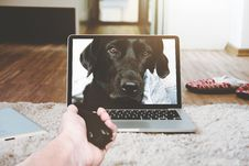 Free Dog Shaking Paw Through Computer Screen Stock Photo - 88103730