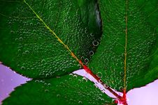 Free Water Drops On Green Leaves Royalty Free Stock Photo - 88104635