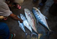 Free 2013_03_16_Somalia_Fishing M Stock Photography - 88190272