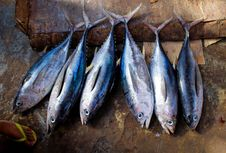 Free 2013_03_16_Somalia_Fishing G Stock Photo - 88191440