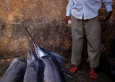 Free 2013_03_16_Somalia_Fishing N Stock Image - 88191461