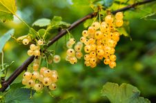 Free Yellow Round Berries During Daytime Royalty Free Stock Photos - 88192938